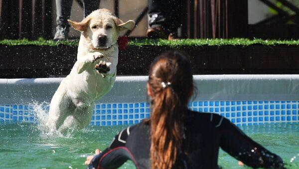 Pies skaczący do wody - Sputnik Polska