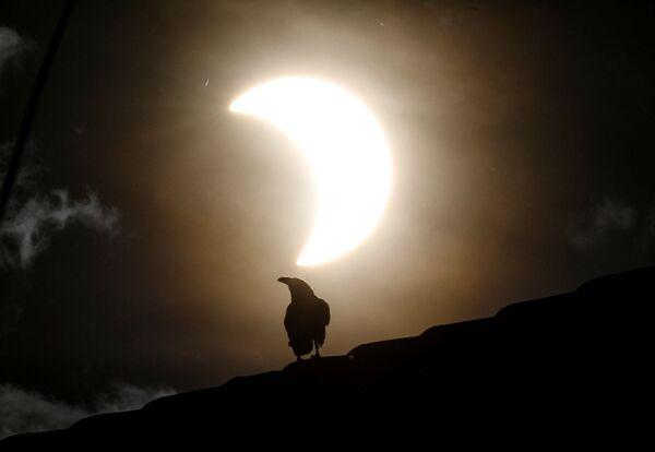 Wrona podczas częściowego zaćmienia Słońca w Kenii - Sputnik Polska