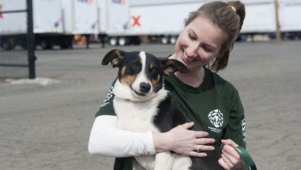 Dziewczyna głaszcze psa na lotnisku w Soczi, Rosja - Sputnik Polska