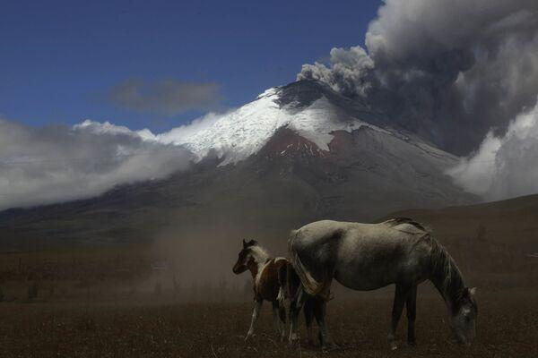 Erupcja wulkanu Cotopaxi w Ekwadorze - Sputnik Polska