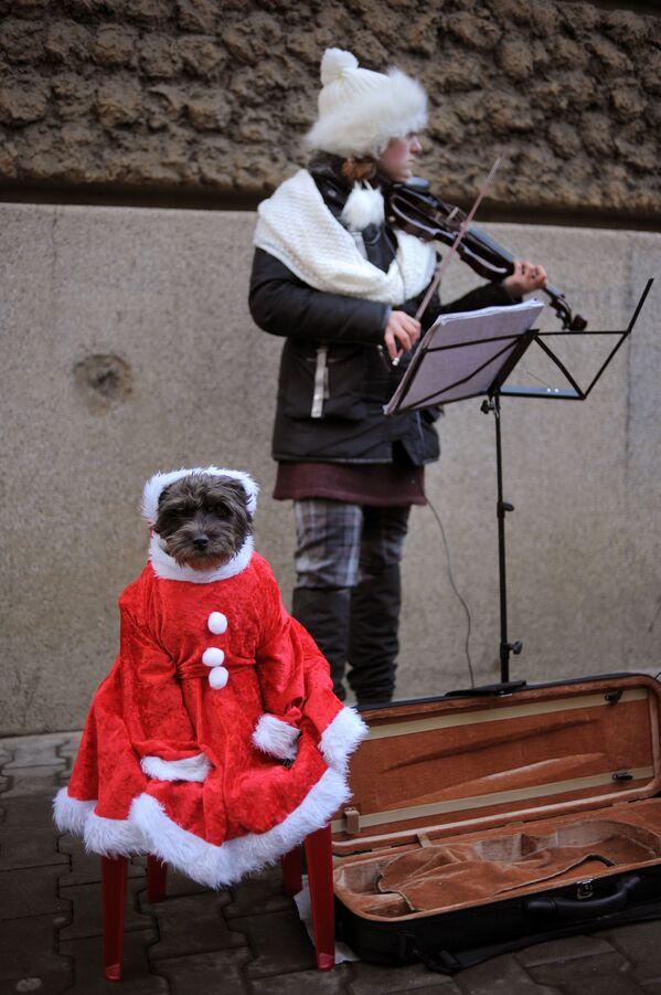 Dziewczyna podczas gry na skrzypcach w przejściu w Sofii - Sputnik Polska