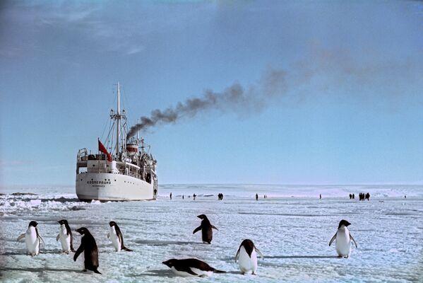 Statek Kooperacja u brzegu Antarktydy - Sputnik Polska