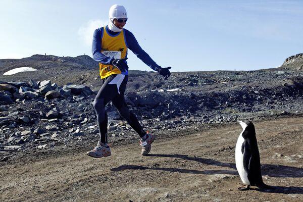 Uczestnik maratonu na Antarktydzie podczas spotkania z pingwinem - Sputnik Polska