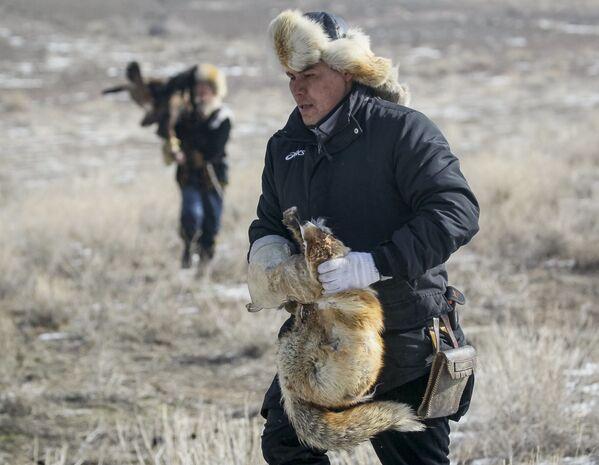 Myśliwy trzyma lisa, którego złapał orzeł podczas tradycyjnych zawodów myśliwskich w miejscowości Nura w Kazachstanie - Sputnik Polska