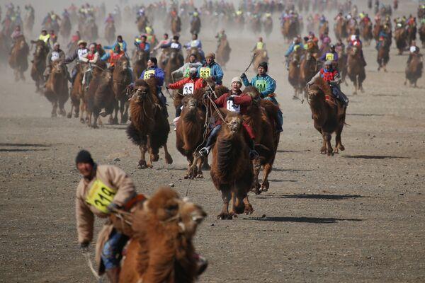 Uczestnicy wyścigu na wielbłądach w Mongolii - Sputnik Polska