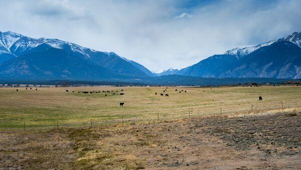 Pastwiska krów w Australii - Sputnik Polska