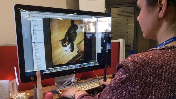 Mieszkaniec Moskwy wystawił na sprzedaż dziewictwo swojego kota - Sputnik Polska