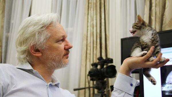 Julian Assange ze swoim kotem - Sputnik Polska