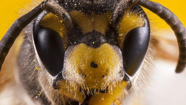 Ogromny rój pszczół zatrzymał ruch w centrum Londynu - Sputnik Polska