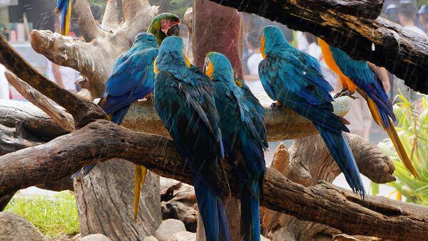 Papuga ara w ogrodzie zoologicznym - Sputnik Polska