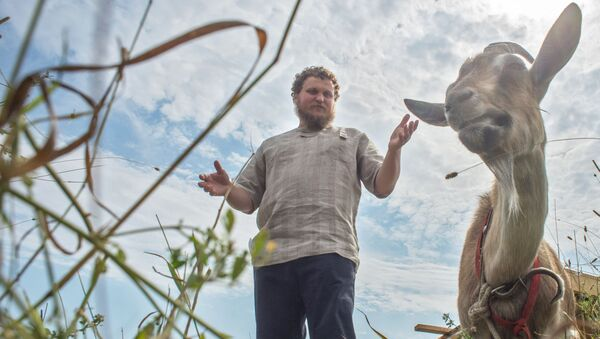 Były specjalista ds. IT, rolnik Oleg Sirota we własnej serowarni położonej w wiosce Dubrowskoje obwodu moskiewskiego - Sputnik Polska
