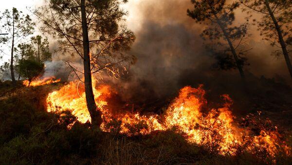 Pożar lasu w Portugalii - Sputnik Polska