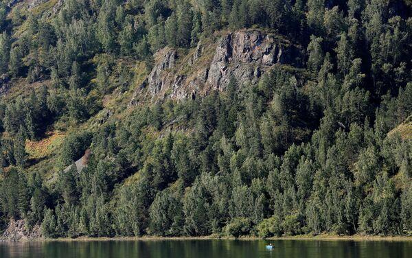 Tajga wzdłuż rzeki Jenisej, Syberia - Sputnik Polska
