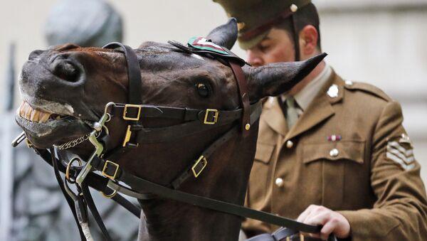 The Times: zagrożenie we wschodu rośnie, a w brytyjskiej armii więcej koni niż czołgów - Sputnik Polska
