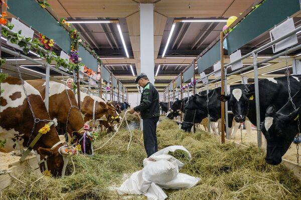 Podczas wystawy zostało podpisane porozumienie o budowie mleczarni wartej 2 mld rubli w piesczanokopskim rejonie obwodu rostowskiego. - Sputnik Polska