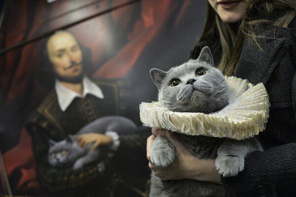 Brytyjski kot został pierwszym pasażerem na trasie szekspirowskiego pociągu - Sputnik Polska