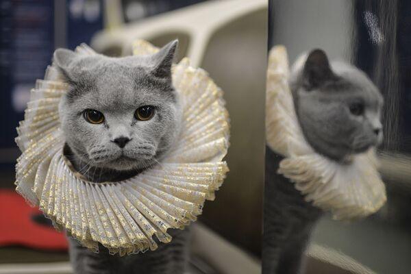Kot zajął miejsce na siedzeniu pasażerskim i pokierował skład pasażerski w dobrą drogę. - Sputnik Polska