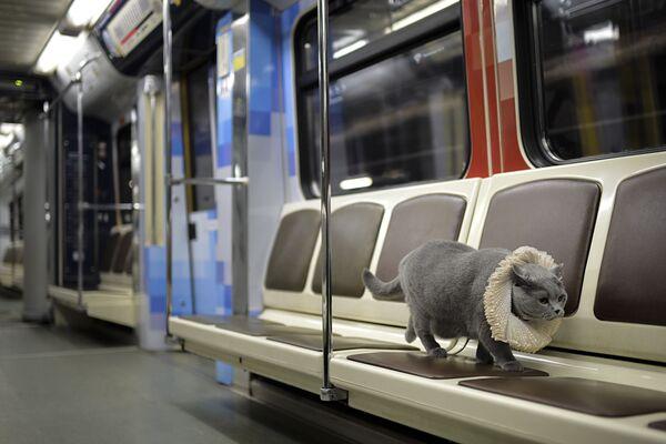 Zdaniem badaczy Szekspir często wspominał o kotach w swoich utworach: ponad 40 razy. - Sputnik Polska