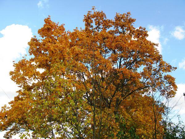 Złota jesień w obwodzie moskiewskim (Lesnoj Gorodok, rejon odincowski) - Sputnik Polska