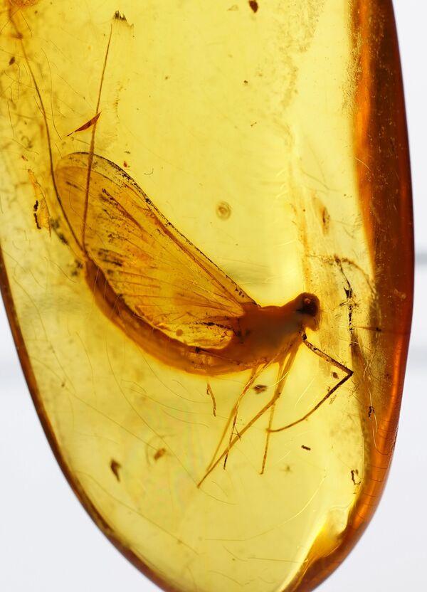 Bursztyn pochodzi z miejsc, gdzie 40-70 mln lat temu rosły bursztynodajne drzewa: lasów Ameryki Północnej, Eurazji, Grenlandii, Spitsbergenu. Naukowcy do tej pory nie mogą dokładnie powiedzieć, jakie to były drzewa. Wiadomo jedynie, że wśród nich było co najmniej sześć gatunków iglastych. Żywica drzew ulegała procesowi skamienienia: pod wpływem środowiska jej skład się zmieniał. Tak powstał bursztyn. - Sputnik Polska
