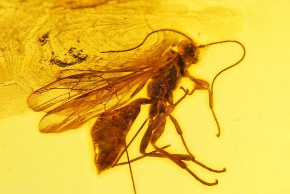 Aż do VIII wieku krążyło wiele wersji i legend na temat pochodzenia bursztynu. Bursztyn nazywano zastygłymi cząstkami promieni słonecznych, skamieniałą pianą morską, zastygłą rosą osadzoną na drzewach, zastygłymi łzami ptaków a nawet produktem ubocznym dużych mrówek leśnych i pszczół. - Sputnik Polska