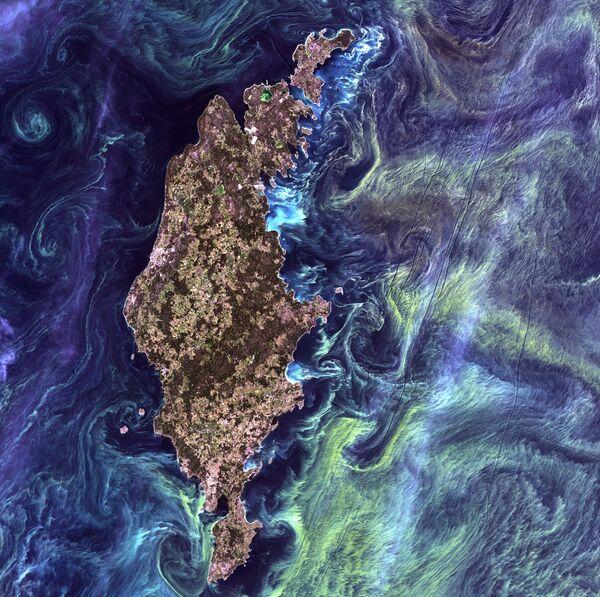 Ogromne skupiska fitoplanktonu w ciemnych wodach wokół wyspy Gotlandia na Morzu Bałtyckim. - Sputnik Polska