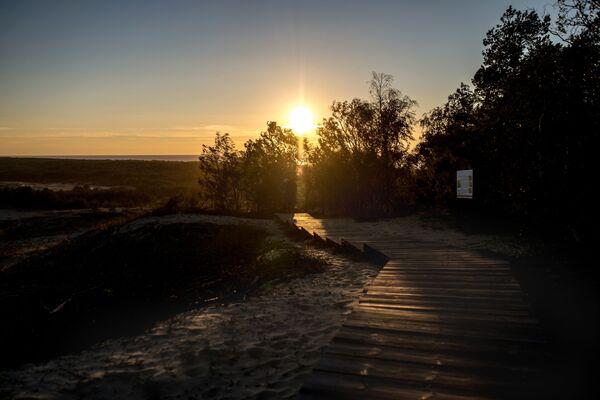 Park Narodowy Mierzei Kurońskiej jest najmniejszym parkiem narodowym Rosji i jednocześnie jednym z najczęściej odwiedzanych w kraju. Setki tysięcy turystów co roku przyjeżdżają na półwysep, żeby podziwiać jego unikalną przyrodę. - Sputnik Polska