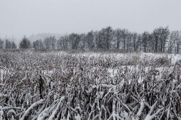 Zaśnieżona łąka w Karelii - Sputnik Polska