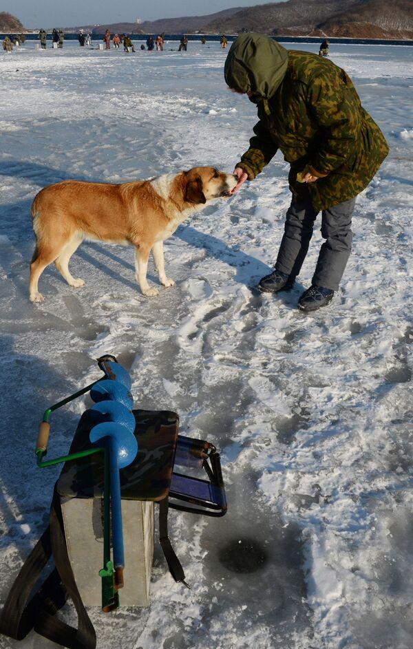 Połów stynki pod lodem nad zatoką Amurską i przy Wyspie Rosyjskiej - Sputnik Polska