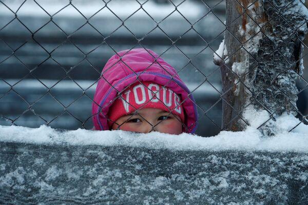 Dziewczynka obserwuje, jak odbywa się segregacja reniferów - Sputnik Polska