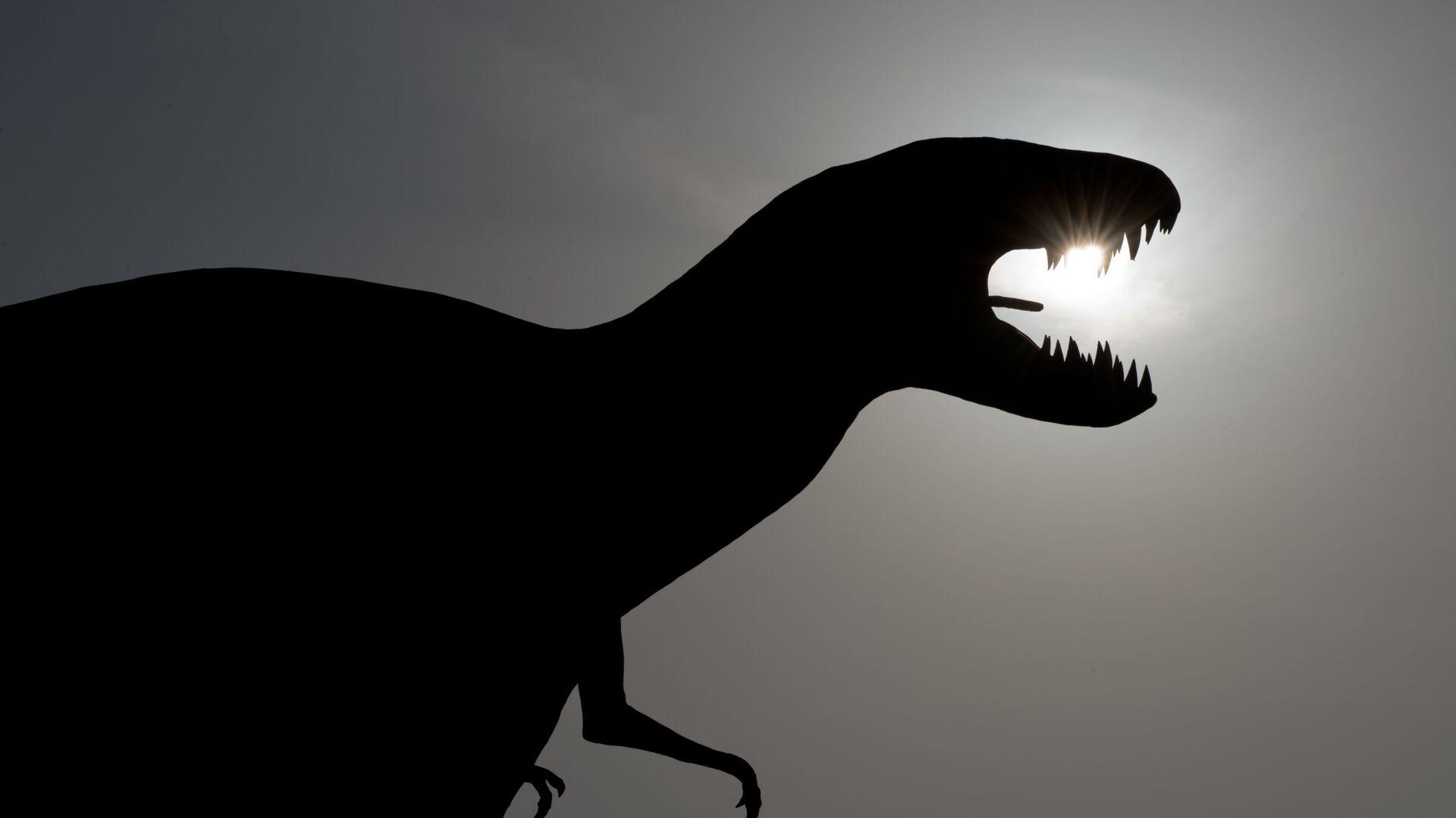 Do niedawna nauka znała tylko kilka pojedynczych przypadków  skamieniałych jaj dinozaurów i fragmentów ich skorup - Sputnik Polska, 1920, 13.09.2021