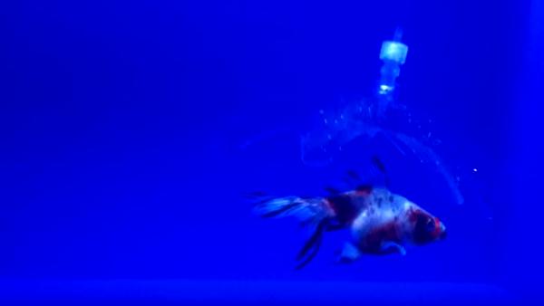 Wędki zastąpią roboty meduzy? - Sputnik Polska