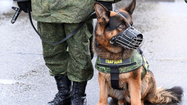 Żołnierz Rosgwardii z psem - Sputnik Polska