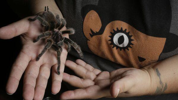 Tarantula - Sputnik Polska