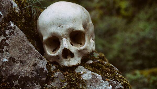 Ludzka czaszka - Sputnik Polska
