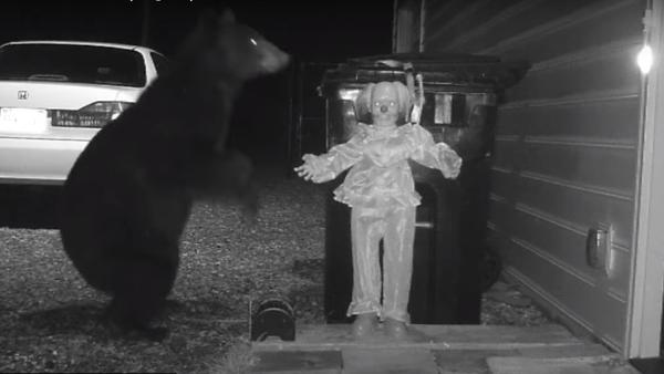 Niedźwiedź wystraszył się klauna - Sputnik Polska