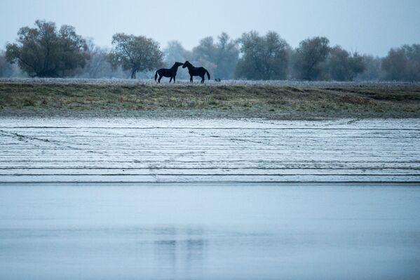 Międzynarodowy Konkurs Fotografii Prasowej - Sputnik Polska