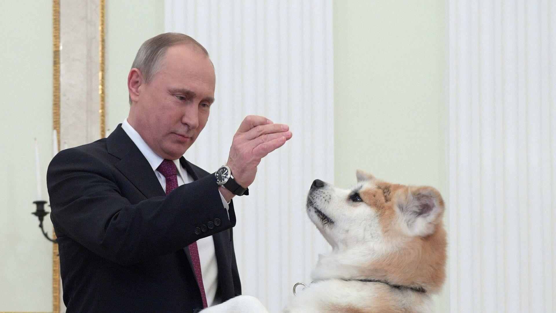 Президент России Владимир Путин с собакой Юмэ перед началом интервью в Кремле телекомпании Ниппон и газете Иомиури в преддверии официального визита в Японию - Sputnik Polska, 1920, 05.09.2021