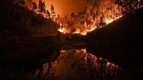 Pożary lasów w Portugalii - Sputnik Polska