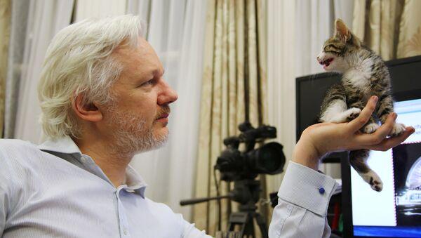 WikiLeaks founder Julian Assange holds up his new kitten at the Ecuadorian Embassy in central London, Britain. (File) - Sputnik Polska