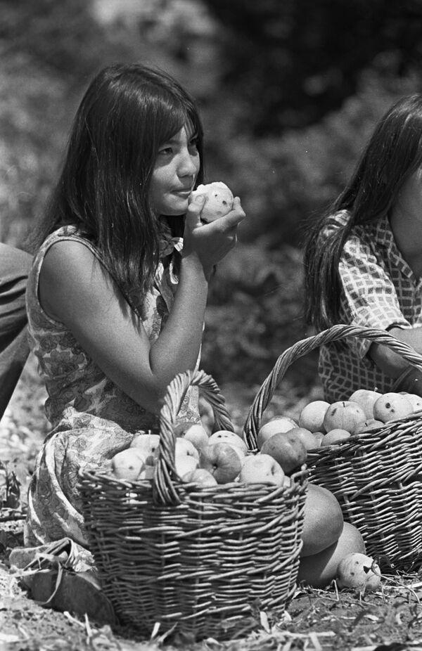 Studentka Baszkirskiego Instytutu Pedagogicznego przy zbiorze jabłek - Sputnik Polska