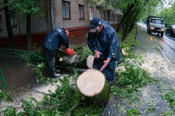 Pracownicy służb komunalnych usuwają zwalone drzewo po ulewie w Moskwie - Sputnik Polska