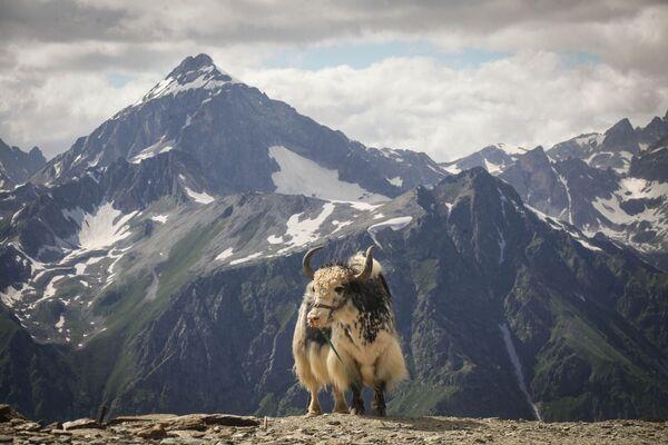 """Dombaj jest też nazywany """"sercem gór"""". Dombajska dolina jest położona na wysokości 1600 m n.p.m., a okalające ją góry osiągają wysokość 3000-4000 m. - Sputnik Polska"""