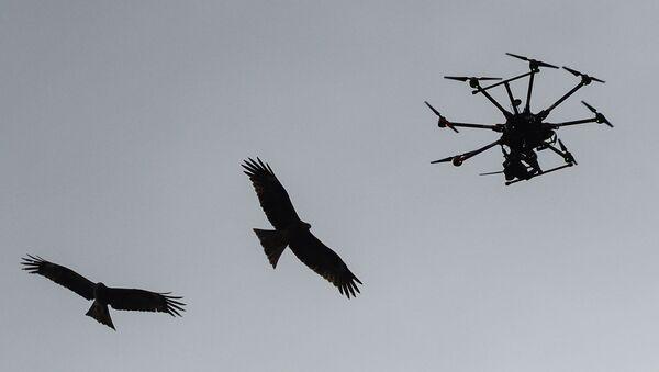 Ptaki i quadrocopter - Sputnik Polska