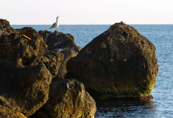 Morze Azowskie - Sputnik Polska
