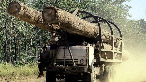 Ciężarówka z odpiłowanymi pniami drzew w Kambodży - Sputnik Polska