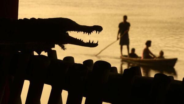 Mężczyźni łowią ryby w pobliżu krokodyla w Barra de Santiago, Salwador. - Sputnik Polska