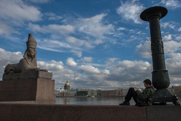 Sfinks na nabrzeżu Uniwersyteckim w Petersburgu - Sputnik Polska