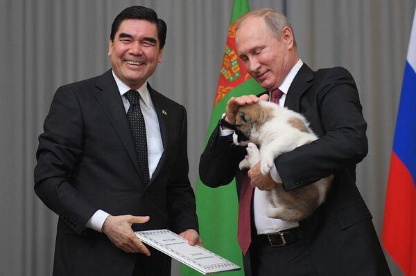 Prezydent Turkmenistanu Gurbanguly Berdimuhamedow podarował Władimirowi Putinowi szczeniaka ałabaja (owczarka środkowoazjatyckiego) - Sputnik Polska