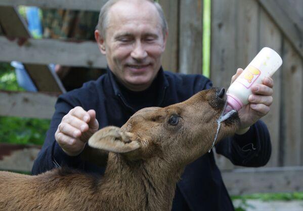 Władimir Putin w parku Leśna wyspa - Sputnik Polska
